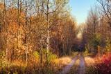 Autumn Trail 29798