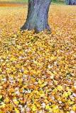 Blanket Of Leaves 20121019