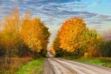 Autumn Back Road 29806