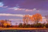 Autumn Trees At Sunrise 29935