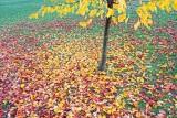 Autumn Leaves 20121030