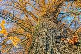 Up A Tree 20121031
