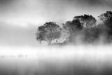 Morning Mist 29203