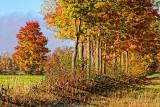 Autumn Trees 29314