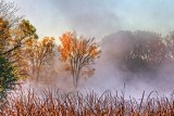 Autumn Morning Mist 29215