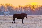 Two Horses At Sunrise 20121118
