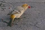 Bird On The Driveway 31045