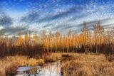 Brassils Creek At Sunrise 20121125