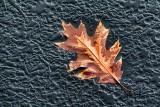 Leaf On Ice 31822-3