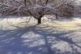 Snowscape Shadow 32311