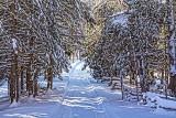 Winter Laneway 32620