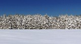 Winter Pines 32602