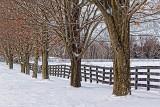 Winter Farm Fence 20130107