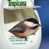 Tropicana Chickadee 28441