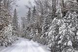Marlborough Forest Snowscape 33226