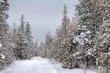 Marlborough Forest Snowscape 33220