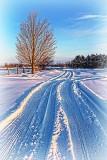 Snow Tracks 33586