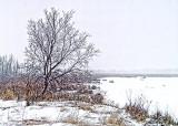 Tree In Snowstorm 20130220