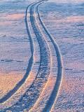 Snow Tracks 33724