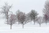 Fog In The Park 33808-9
