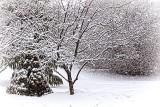 Heavy Wet Snowfall 33820