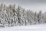 Snowy Fence & Pines 33913