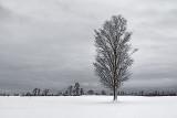 Lone Winter Tree 33950