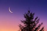 Moon & Pine At Sunrise 20130309