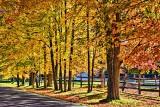 Autumn Scene 29557