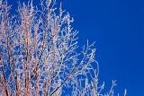 Frosty Tree At Sunrise 20130318