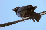 Bird On A Wire DSCF0200