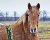 Friendly Horse DSCF00518