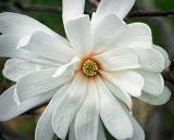 Spring Blossom DSCF01482