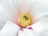 Spring Blossom Closeup DSCF01492