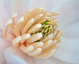 Spring Blossom Macro DSCF01570-82
