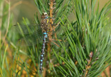 Dragon- and Damselflies 2012