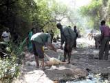 Pour accomplir un vœu, une chèvre est sacrifiée au dessus de la mare aux silures sacrés de Dafra, Burkina Faso