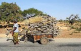 Donkey cart carrying firewood, Burkina Faso