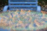 Foliage with chair.jpg