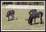 The Donkey Field