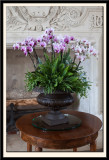 Orchids with Ferns