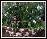 Plant Arrangement from the Florist Department