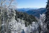 Newfound Gap Snow - Great Smoky Mountain National Park