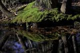 Black Creek Preserve, Esopus