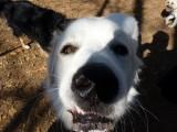 dogpark 016 (Copy).JPG