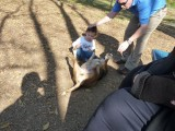 dogpark 017 (Copy).JPG