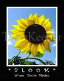 Bloom 11x14 edit.jpg