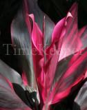 pink 11x14.jpg