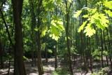 Grunewald Forest, Berlin