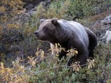 Alaska et/and Yukon 2011